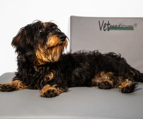 Die Vetmedicum®Frequenz-Feld-Therapiebehandlung beim Hund